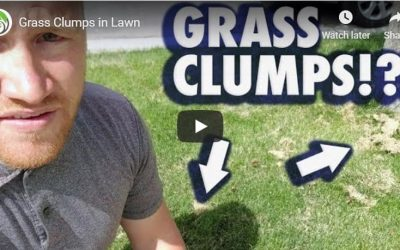 Saratoga Springs Lawn Care Tip of the Week